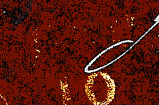 ID 12748, Image ID 8019