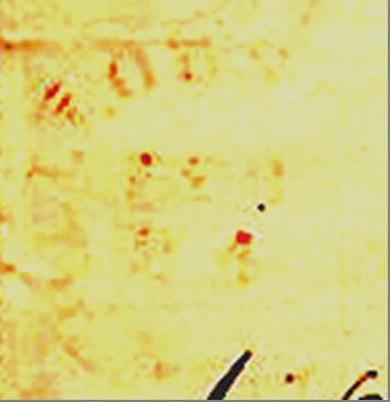 ID 13713, Image ID 9291