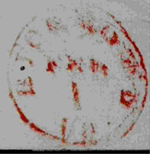 ID 14100, Image ID 8902