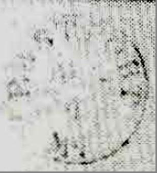 ID 1968, Image ID 1327