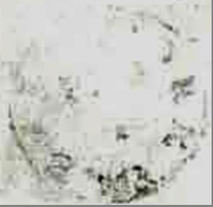 ID 2696, Image ID 22573