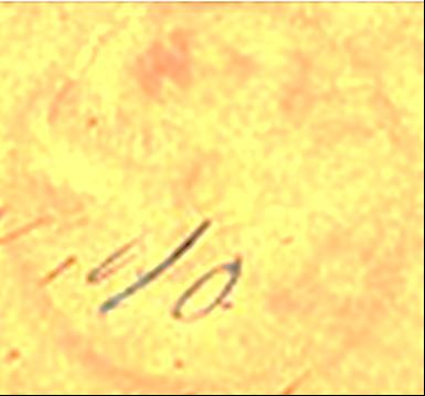ID 7177, Image ID 24669