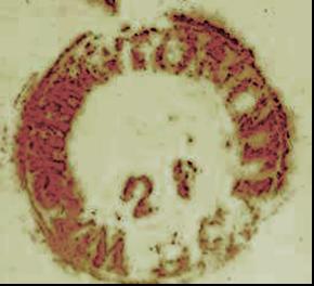 ID 944, Image ID 661